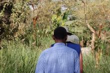 Tall vegetation